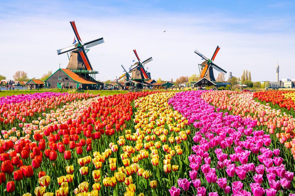 荷蘭留學申請懶人包|一篇瞭解荷蘭留學優勢、申請條件、費用及獎學金!